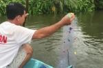 Xem người miền Tây bắt hàng trăm con cá rô phi bằng 1 cái sào
