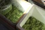 Kinh hoàng hóa chất cực độc tẩm ướp rau muống bào xanh, tươi, giòn