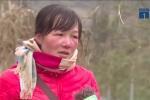 Nông dân Sa Pa khóc ròng nhìn băng tuyết tàn phá hoa màu