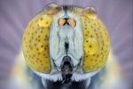 Những loài côn trùng trông thế nào khi chụp cận cảnh?
