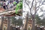 Dân tố cáo đơn vị đấu giá khuất tất trong vụ mua bán cây sưa 24,5 tỉ đồng ở Bắc Ninh