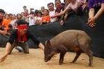 Video: Cười vỡ bụng với cuộc thi bịt mắt bắt lợn rừng ở Bắc Giang