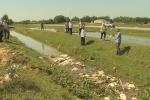 Hàng chục con lợn chết trôi trên kênh dẫn nước ở Hà Tĩnh bị virus dịch tả lợn Châu Phi