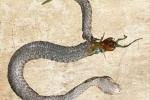 Video: Rết khổng lồ ác chiến rắn độc