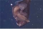 Cận cảnh loài cá có gương mặt quỷ dữ dưới đáy đại dương