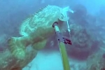 Clip: Cá mú khổng lồ táo tợn 'cướp' cá của ngư dân