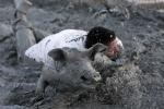 Ảnh: Vùi mình trong bùn đánh vật với lễ hội bắt lợn