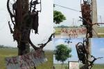 Cướp chó lộng hành ở Nghệ An: Những chiêu đối phó có một không hai