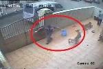 Clip: Cận cảnh cẩu tặc giăng câu trộm chó gây căm phẫn