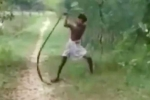 Clip cha dùng tay không giết hổ mang chúa trả thù cho con 'sốt' trên Youtube