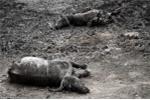 Những hình ảnh 'biết nói' về sự đe dọa cuộc sống hoang dã ở châu Phi
