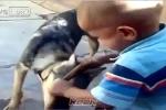 Clip: Bị chó cắn, em bé tức giận quay lại cắn chó