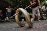 Cảnh tượng rắn hổ chúa khổng lồ liên tục 'xâm chiếm' nhà dân