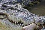 Đang đi qua cầu, cá sấu nhảy lên đớp chết