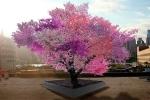 Kỳ diệu cây mọc 40 loại quả khác nhau