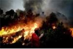 Ảnh ấn tượng: Lính cứu hỏa nhỏ bé trong biển lửa