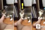 Clip: Chú mèo 'chết ngất' sau khi ngửi chân chủ