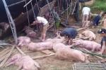 Lật xe tải, dân trắng đêm giúp tài xế vây bắt lợn