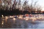 Hàng trăm con cá chép nhảy lên mặt hồ tấn công người bơi thuyền