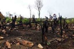 Đảo Phú Quốc: Vấn nạn rác thải, phá rừng