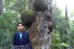 Những thân cây lạ quanh ngôi đền linh thiêng không ai dám vào ở Hà Giang