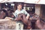 Anh hùng lao động Hồ Giáo: Người chăn bò vĩ đại