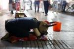 Cô gái hóa trang thành bò kiếm tiền chữa bệnh cho cha