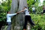 Thảm thương phận 'cây ướp xác' khổng lồ ở Tây Côn Lĩnh