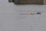 Hài hước chó nhảy xuống nước bơi cùng cá heo