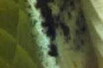Clip: Hoảng hồn rệp bò nhung nhúc dưới đệm trong khách sạn