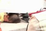 Giải cứu em bé bị kẹt đầu vào thành cầu
