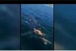 Thanh niên liều lĩnh nhảy xuống biển cưỡi cá mập