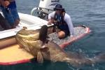 Video: Ngư dân chinh phục 'thủy quái' khổng lồ