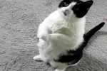 Khoảnh khắc chó mèo vái lạy xin ăn đáng yêu chưa từng thấy