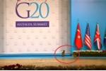 Clip: Mèo 'đột nhập' hội nghị G20, chiếm sân khấu của các nguyên thủ quốc gia