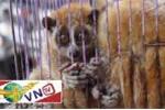 Động vật hoang dã 'thảm thiết' kêu cứu