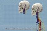 Clip 3D mô phỏng chi tiết quá trình cấy ghép đầu người