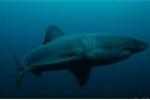 Tìm kiếm sinh vật bí ẩn ăn thịt dã man cá mấp trắng dài 3m