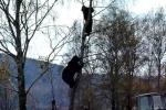 Bi hài clip gấu lùa người trèo lên tít ngọn cây