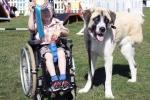 Chú chó 3 chân chăm sóc bé mắc bệnh lạ