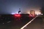 Clip: Ôtô đâm tung con bò đi lạc trên cao tốc