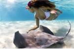 Video: Nín thở xem người mẫu chụp hình cùng cá đuối gai độc