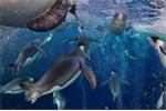 Cuộc chiến sinh tử giữa chim cánh cụt và chim bồ nông