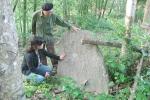 Kỳ bí câu chuyện rừng mộ đá ở đảo Lý Sơn