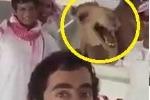 Cười vỡ bụng với kiểu chào của các dân chơi Ả Rập