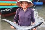 Thắng mùa cá, nghị lực bám biển Hoàng Sa càng căng đầy