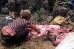 Clip: Hàng chục xác lợn chết tím tái doanh nghiệp vứt đi, dân vẫn lượm về bán