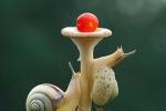 Ngộ nghĩnh xem ốc sên đua leo cây nấm