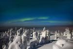 Video, ảnh: Lung linh 'khu rừng ma quái' ở Bắc Cực