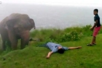 Gã say thách thức voi